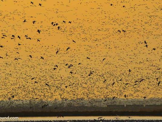 Birding in Loess Bluffs National Wildlife Refuge