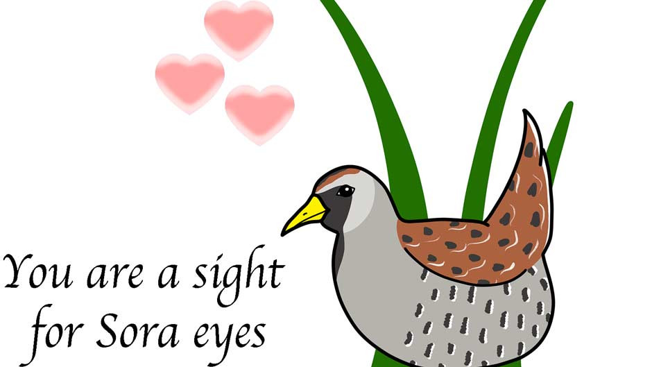 You are a sight for Sora eyes! Bird Valentine's Day Card