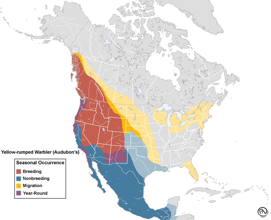 Yellow-rumped Warbler (Audubon's) Range Map