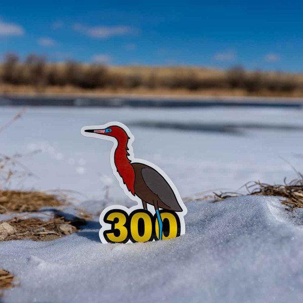 The Reddish Egret requires a trip to the coast. Of course, if you have made it to one of the coasts, you must be near 300 life birds!