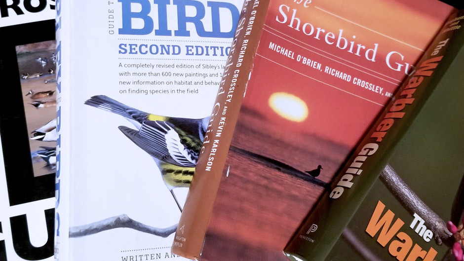 Best Field Guides for Birding