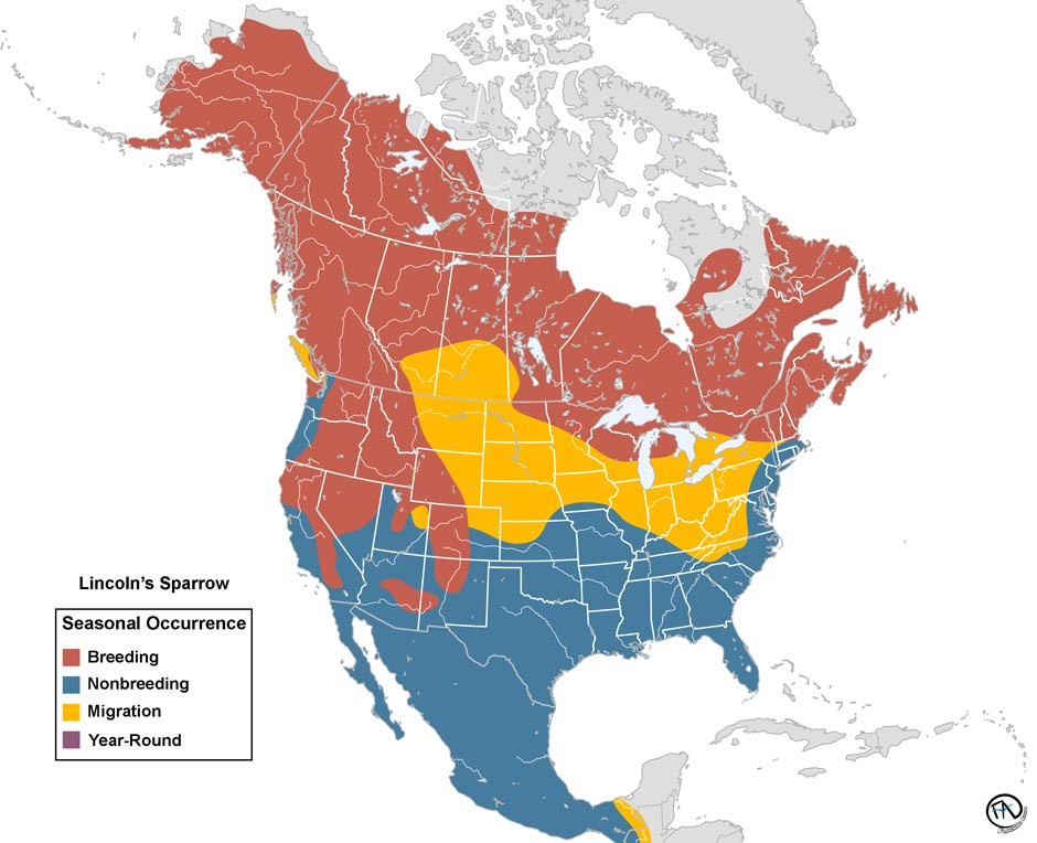 Lincoln's Sparrow Range Map