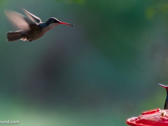 The best first pet? A bird feeder.