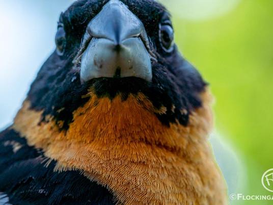 Birding in Dugout Gulch Botanical Trail