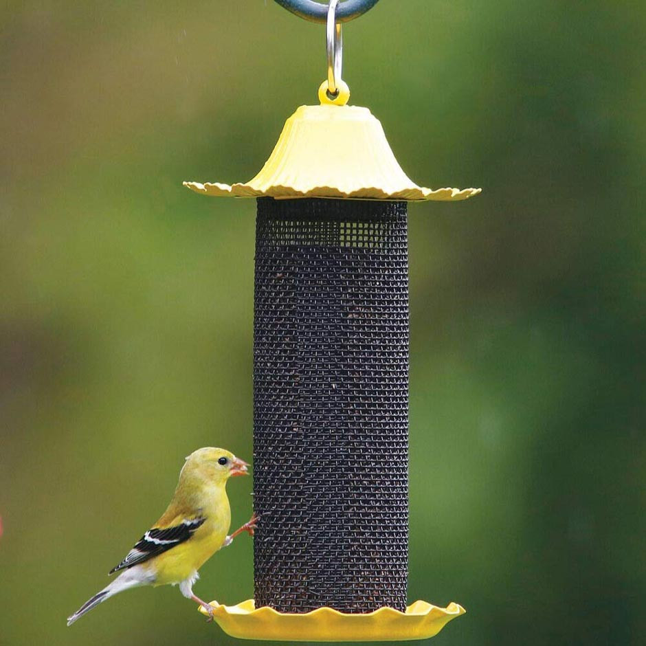 American Goldfinch on a mesh screen feeder