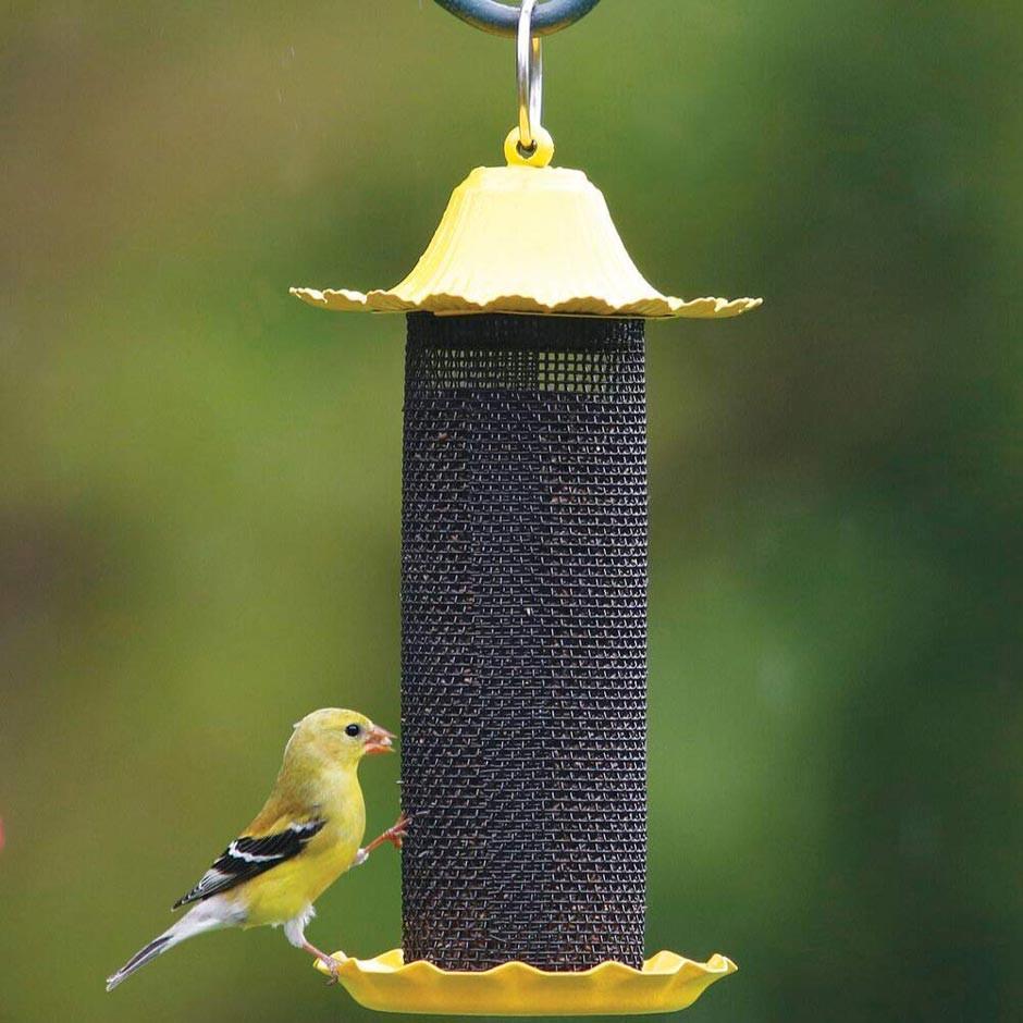 American Goldfinch on Finch Feeder