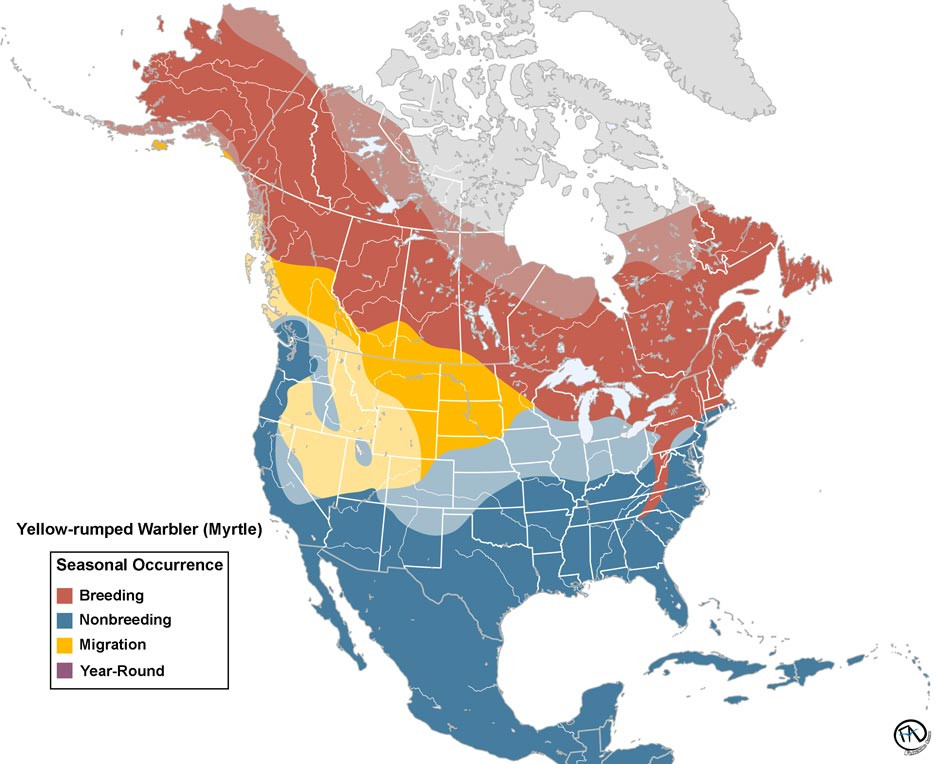 Yellow-rumped Warbler (Myrtle) Range Map