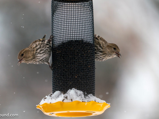 The best finch feeders of 2021 - Buying thistle and Nyjer feeders for finches