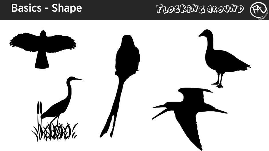 Bird Identification by Shape ©FlockingAround.com