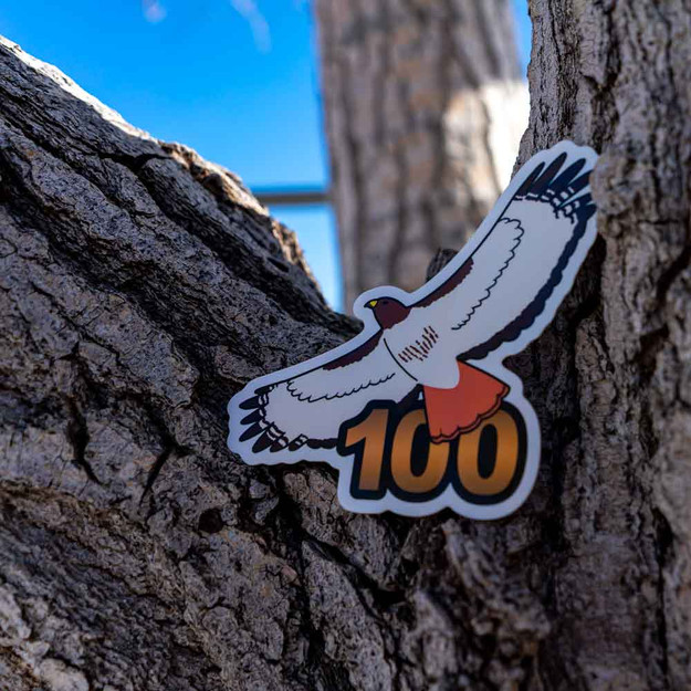 The renowned Red-tailed Hawk is the perfect bird to symbolize your 100th life bird!