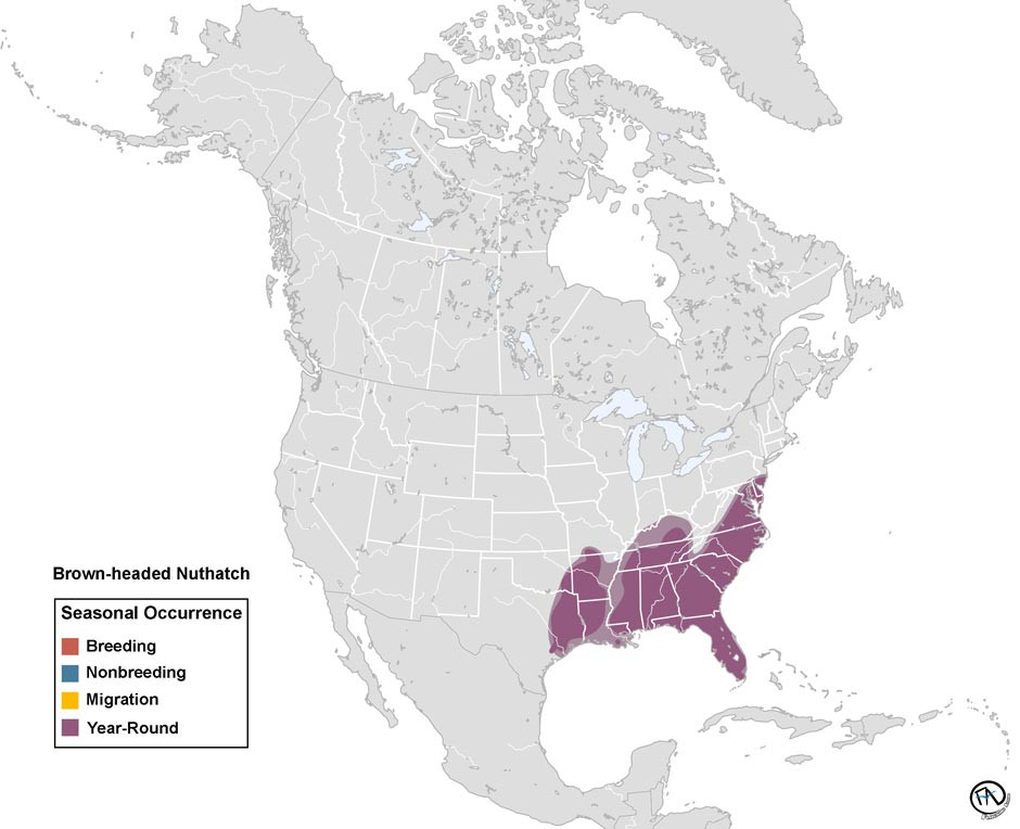 Brown-headed Nuthatch Range Map