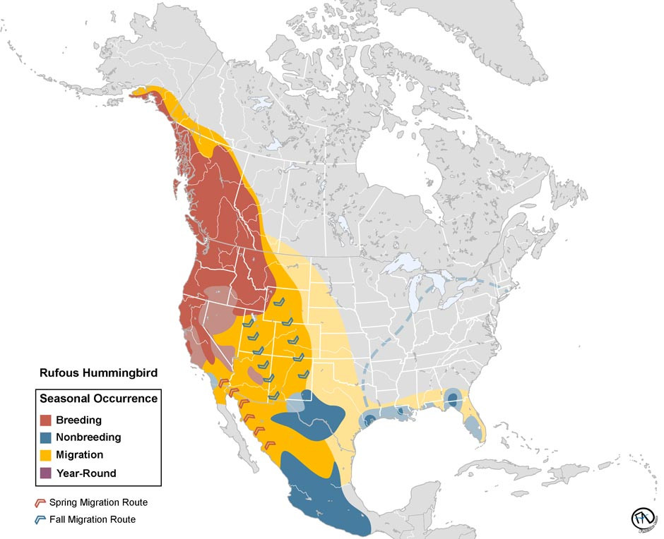 Rufous Hummingbird Range Map