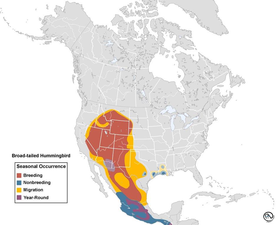 Broad-tailed Hummingbird Range Map