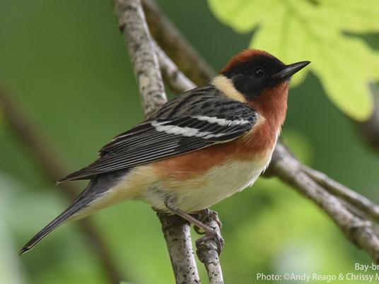 Birding High Island in southeast Texas