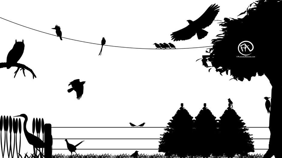 Bird Silhouette Quiz