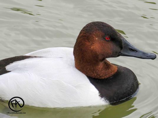 Birding in Hutton Lake National Wildlife Refuge