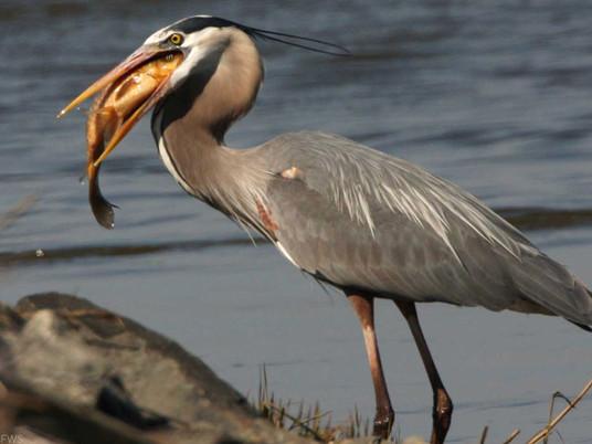 Can birds choke?