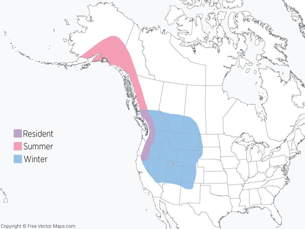 Hepburn's Gray-crowned Rosy-Finch Range Map