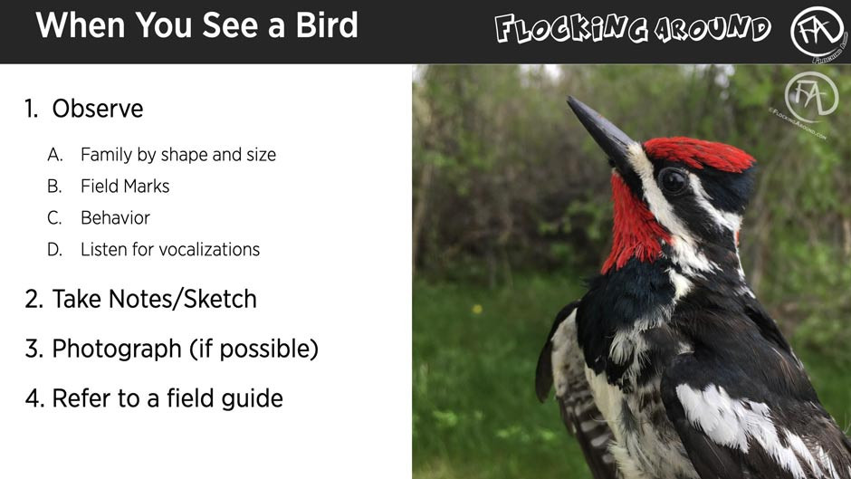 What to do when you see a bird