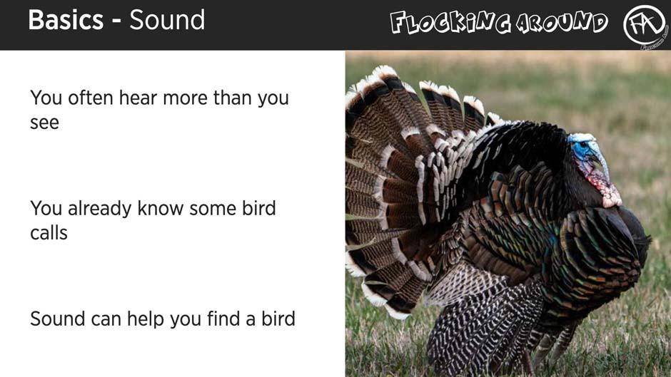 Bird Identification by Sound