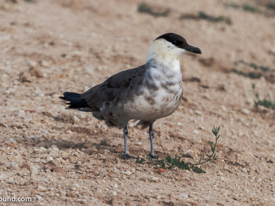 I found a rare bird. Now what? - A guide to finding and reporting rare birds