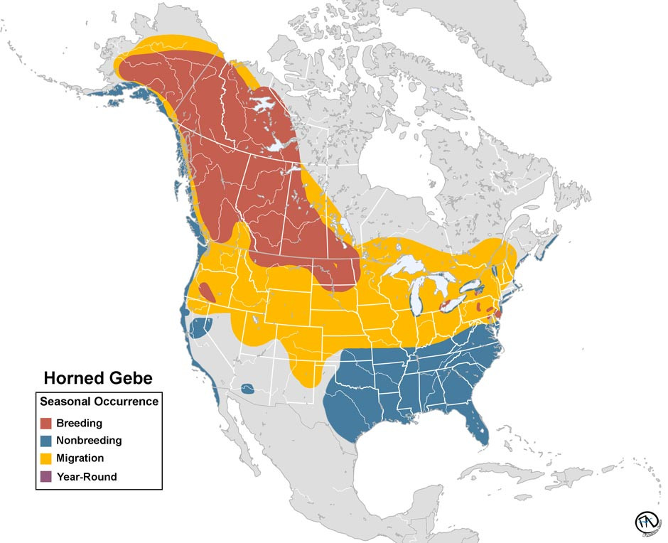Horned Grebe Range Map