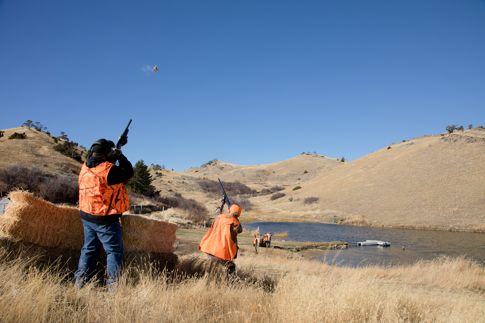 Lots of Action Pheasants