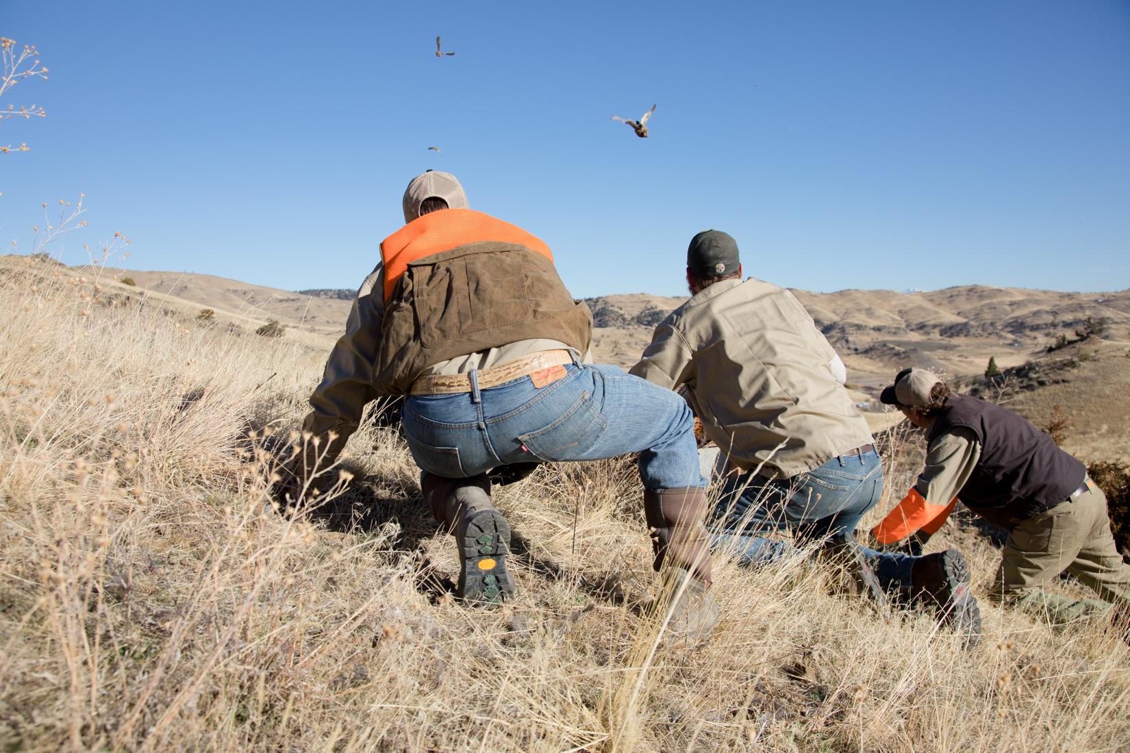 Bird Hunting Season in Montana
