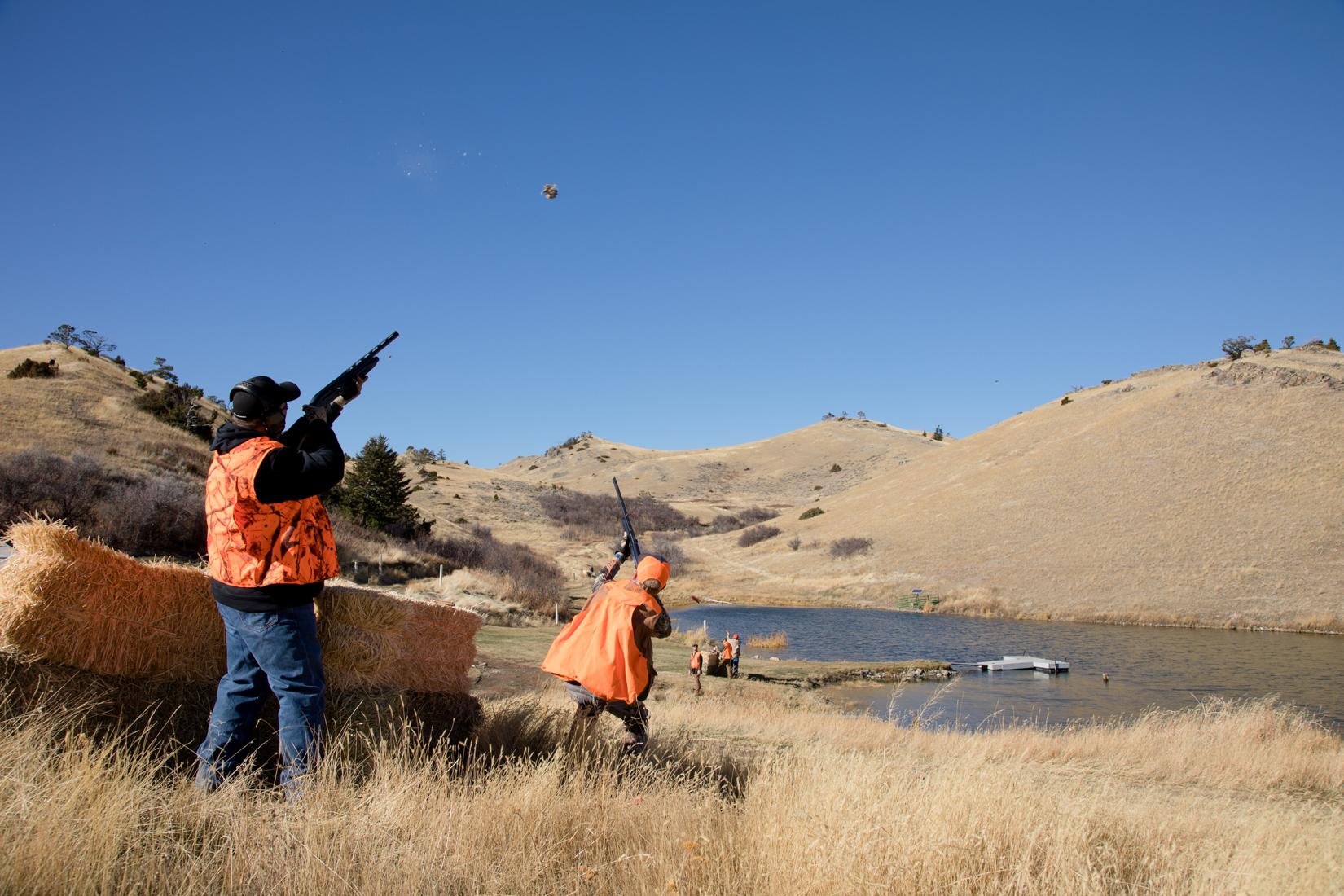 Montana Pheasant Hunting