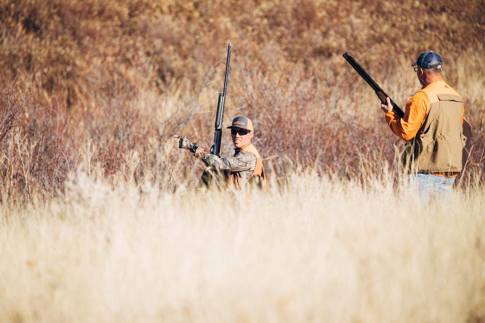 Perfect Pheasant habitat