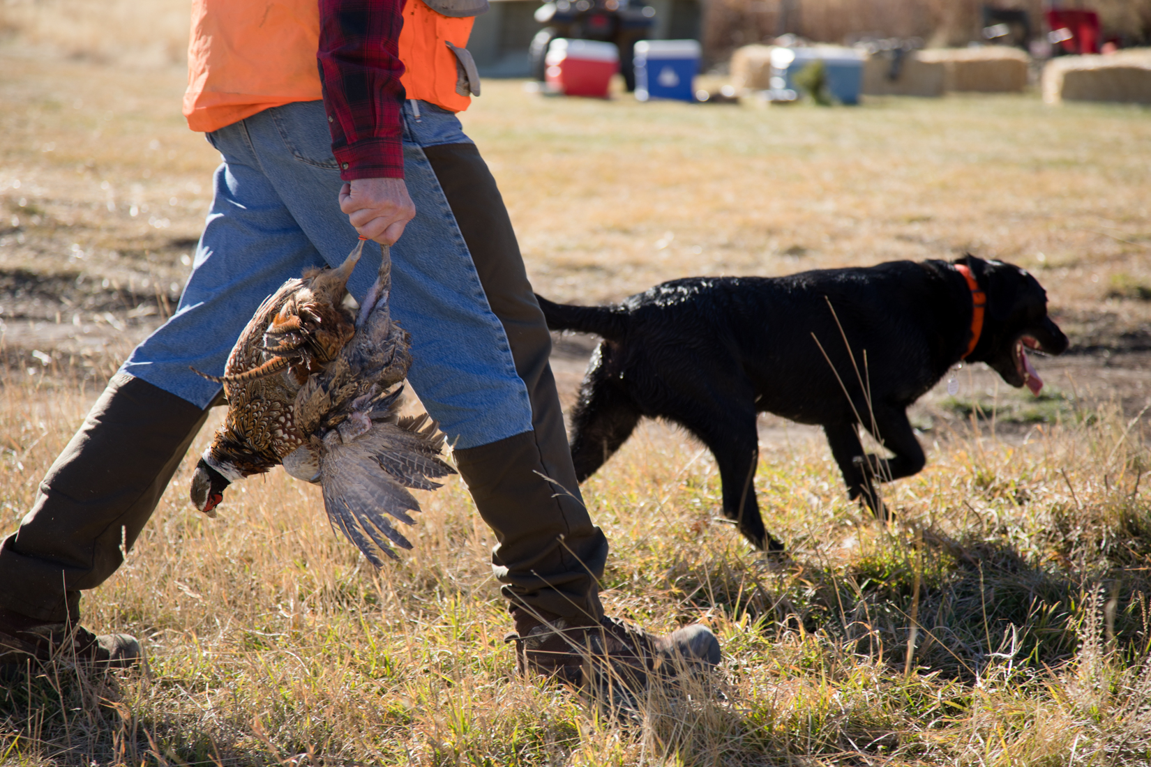 Dog Handlers on MT Pheasant Shoot
