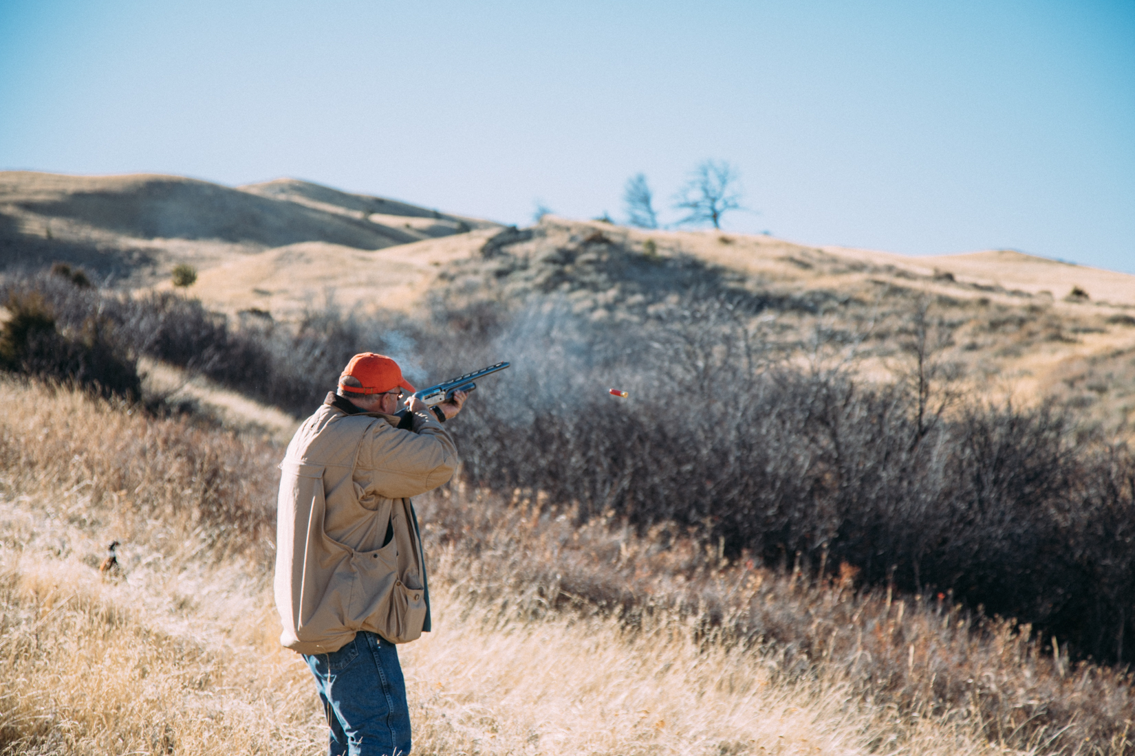 Learning to hunt pheasant