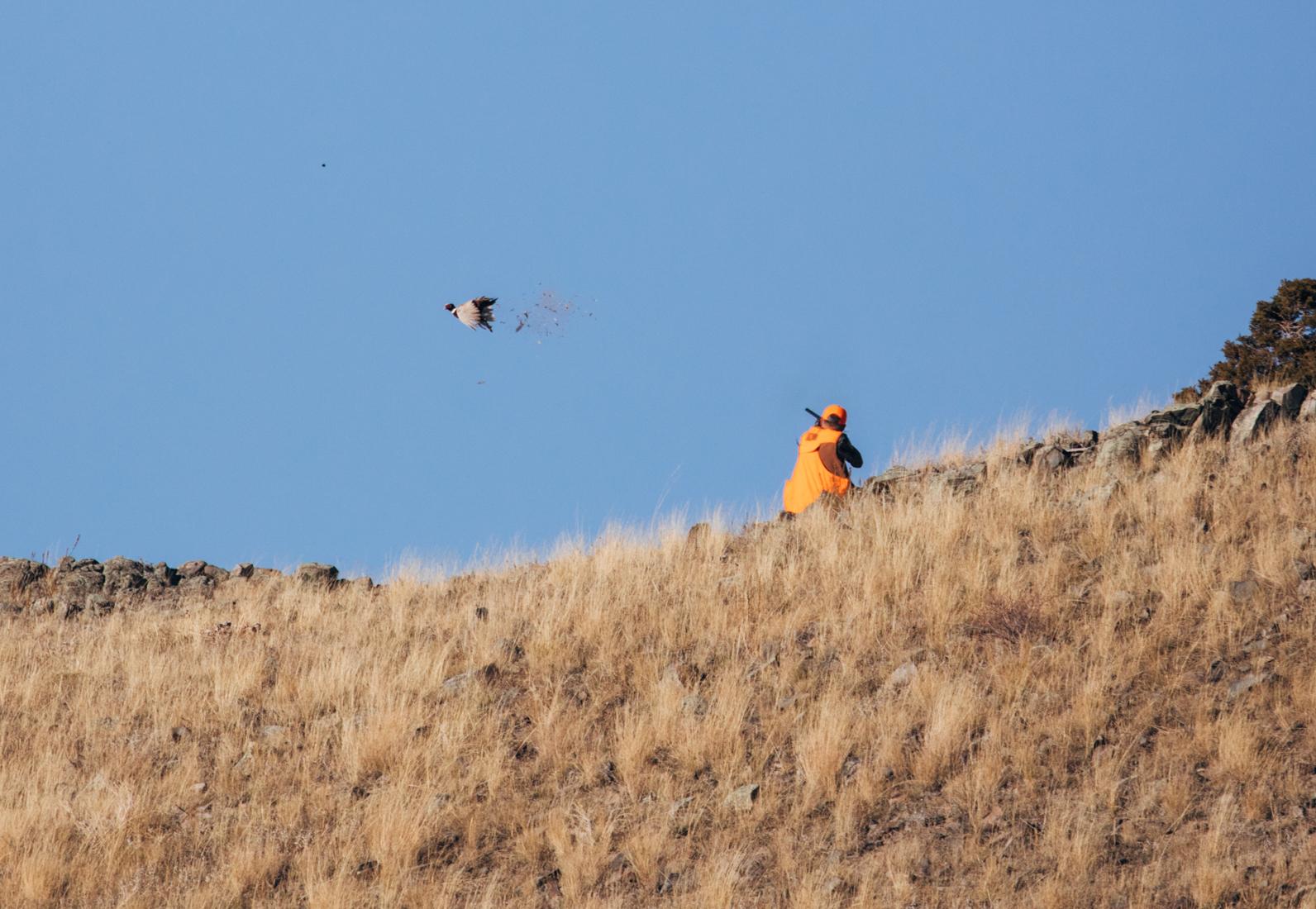 Montana Hunting Preserve
