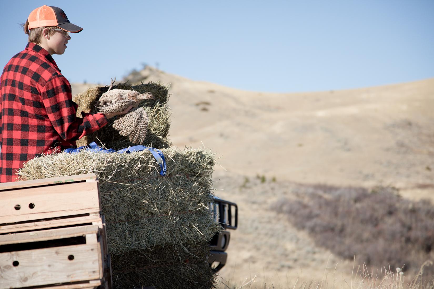 Guided Pheasant Hunts