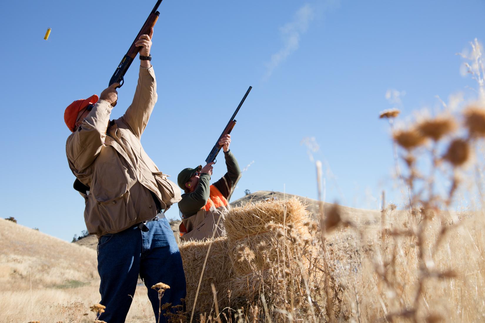 Hunters shooting Pheasants