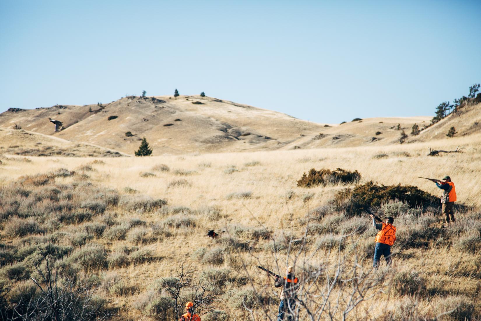 Montana Bird Hunting