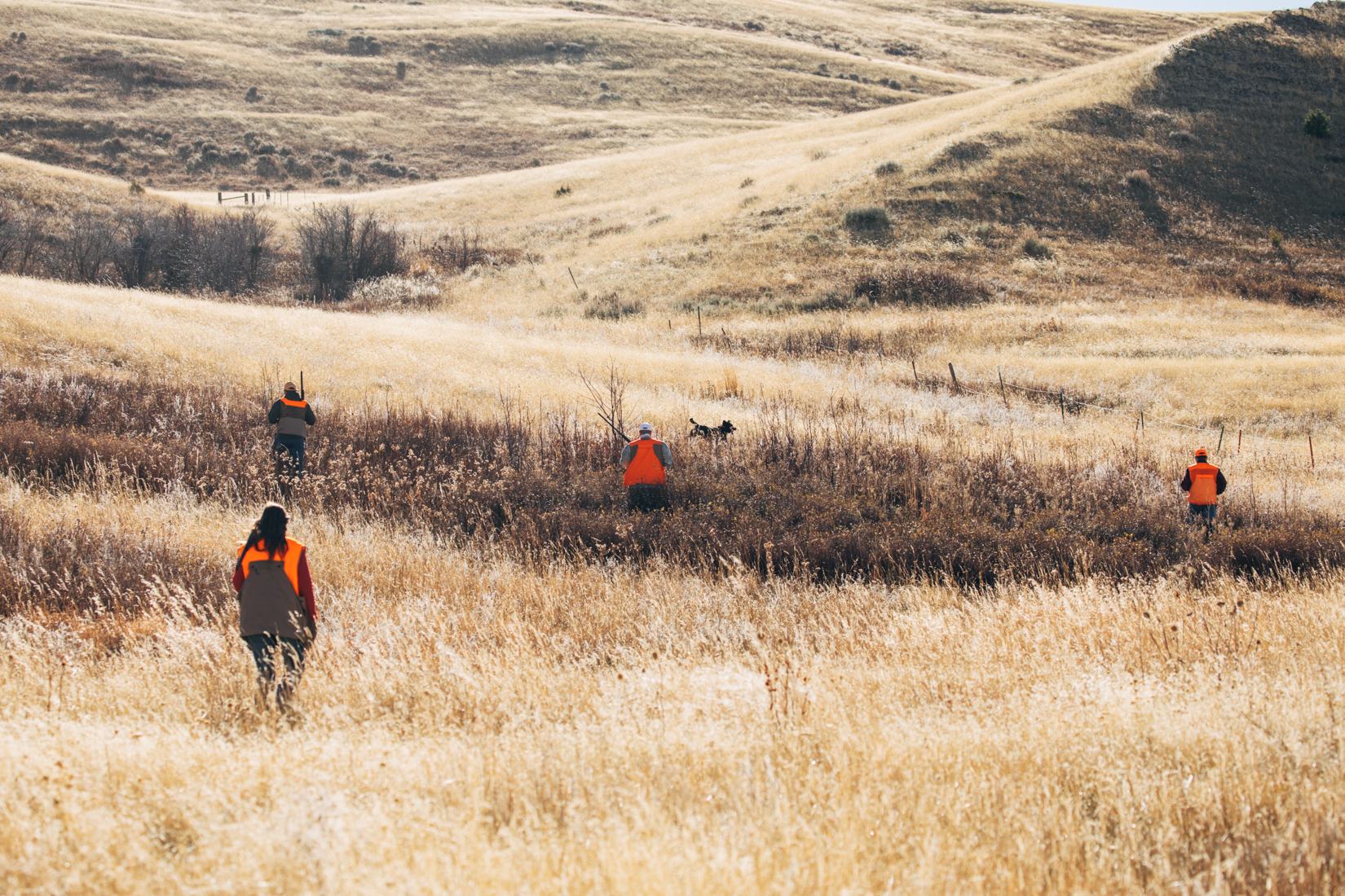 Best Pheasant Hunting in Montana