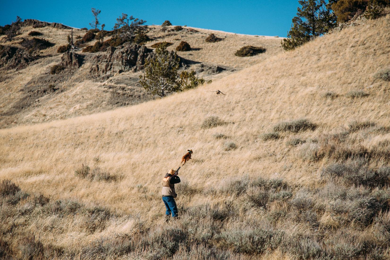 Self-Guided Pheasant hunting MT