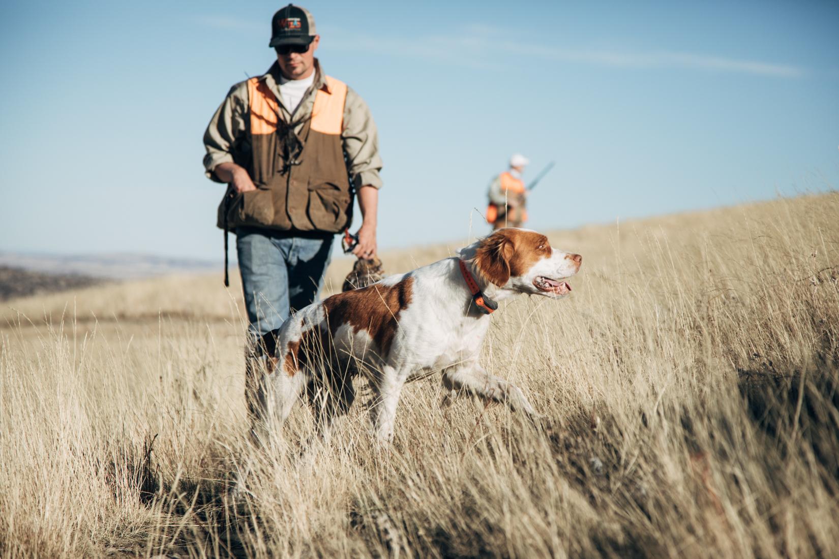 Montana working dog