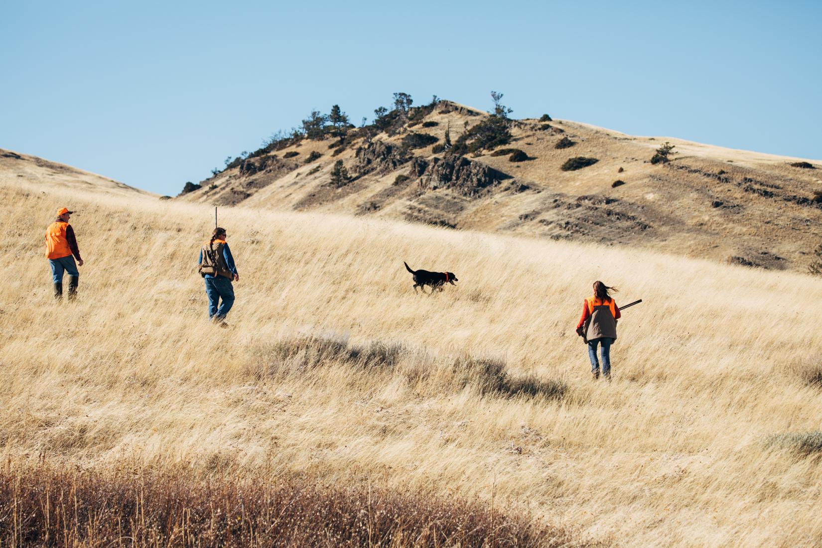 Pheasant hunt dog