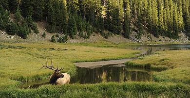 Hunting Around Yellowstone NAtional Park