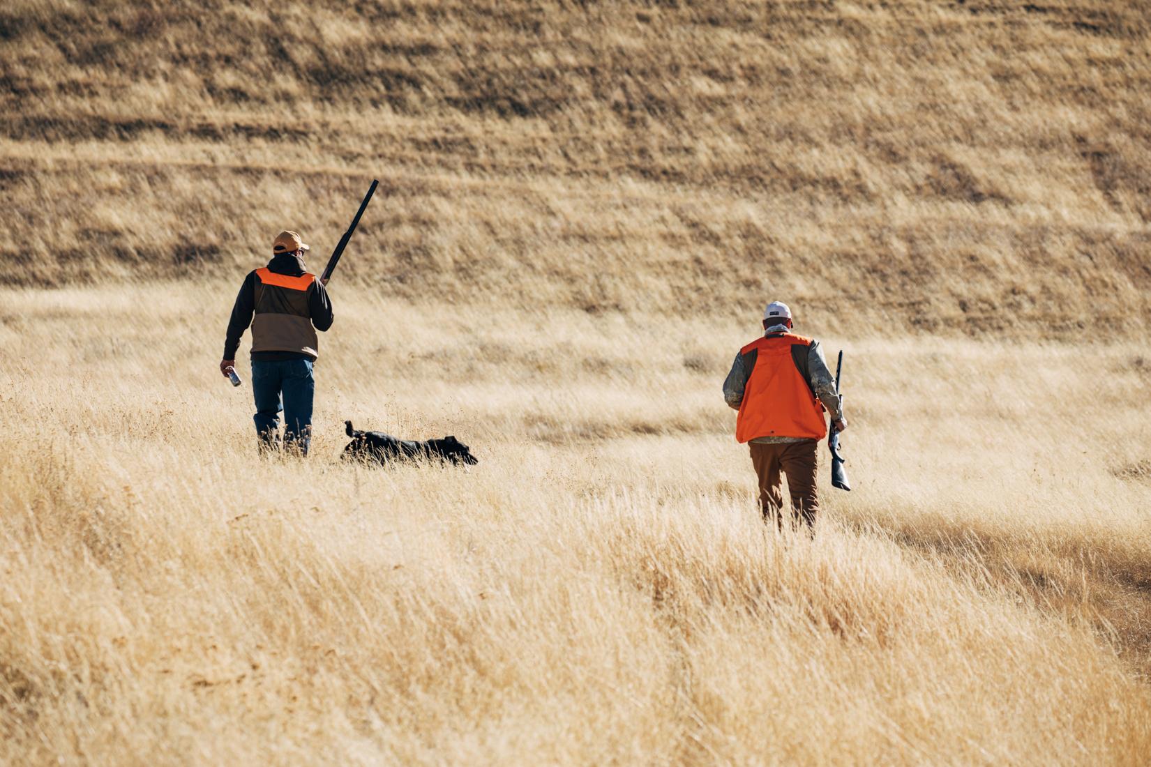 European Pheasant shoot in Montana