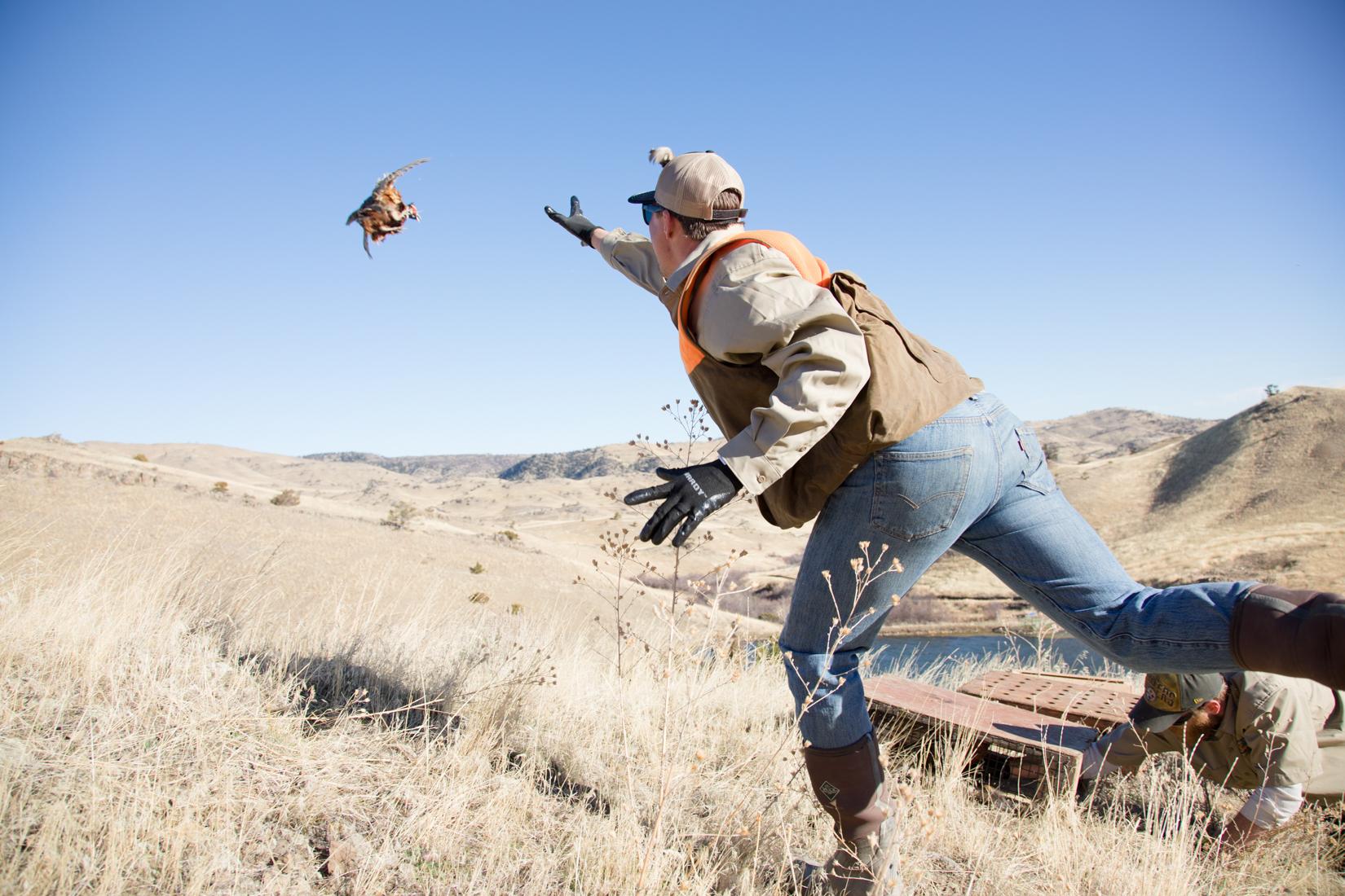 Pheasants in the Wild!