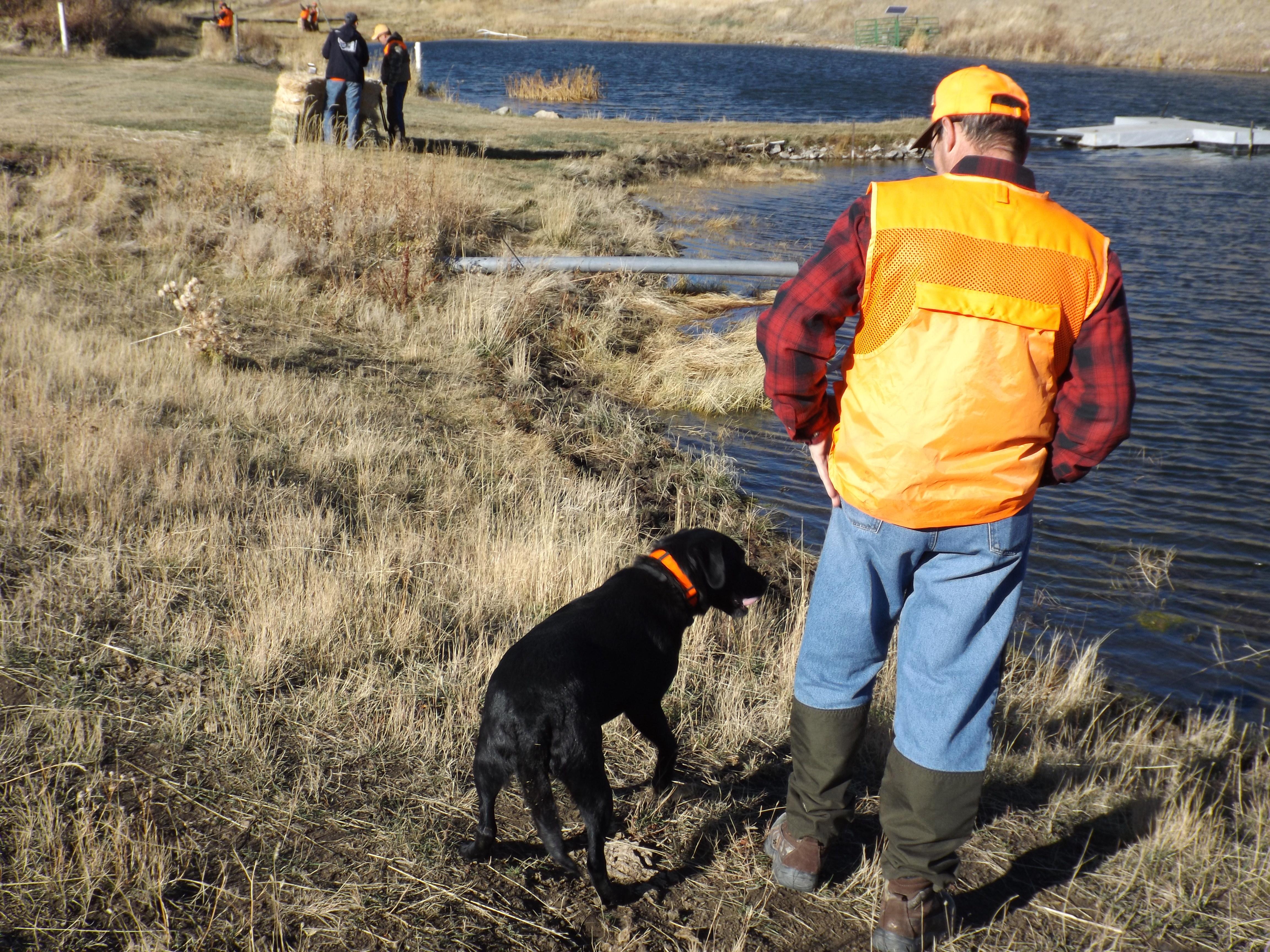 Montana Bird Hunting Action