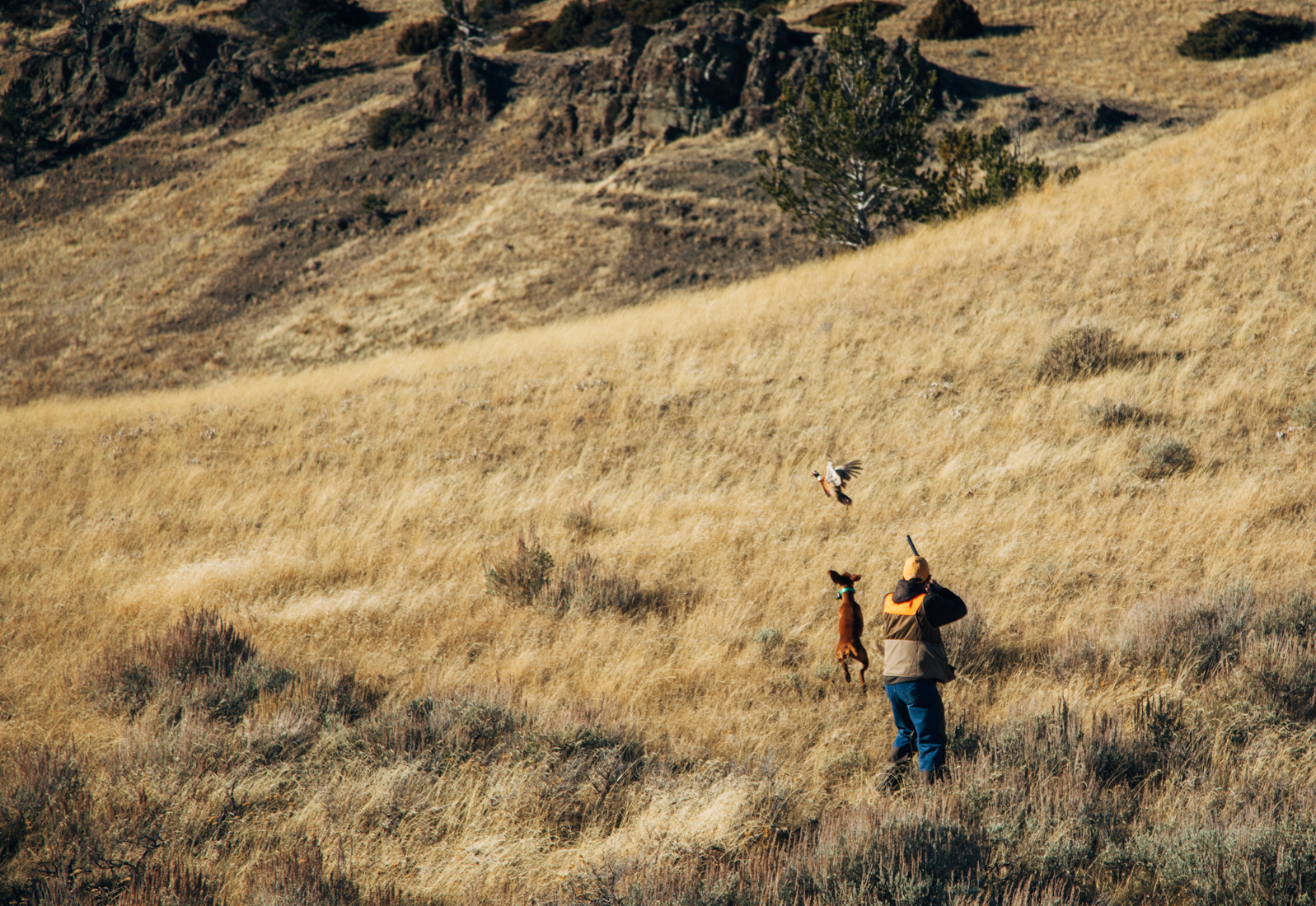 Pheasant Preserve Shooting
