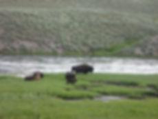 Lodging near Yellowstone NAtional Park