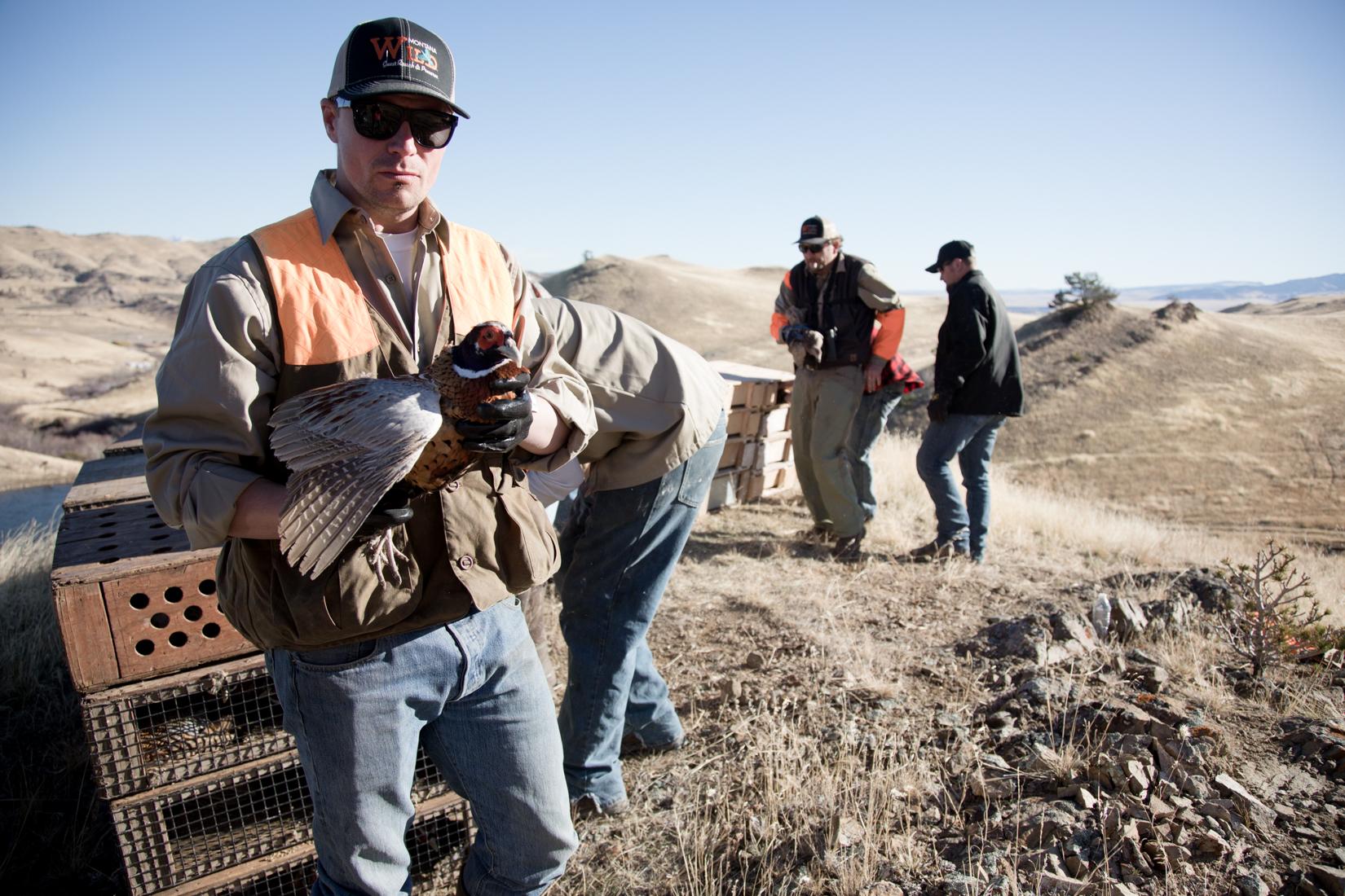Pheasant and Chukar Farm in Montana