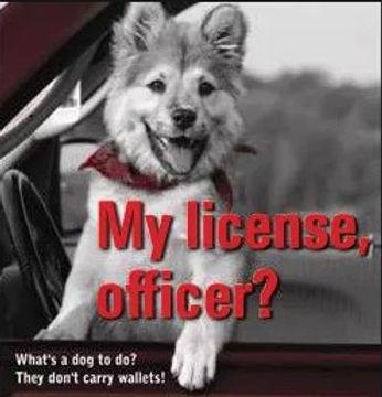 Pet Licensing (002).jpg