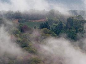 多様な自然の土地がつくり出す、爽やかな有機栽培茶