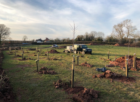 New Orchard in the Making